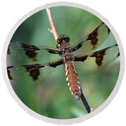 Common White-tail Dragonfly Round Beach Towel