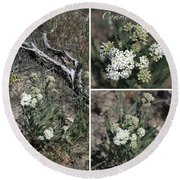 Common Yarrow Collage Round Beach Towel