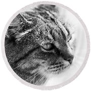 Concentrating Cat Round Beach Towel