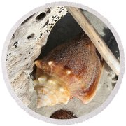 Conchs With Driftwood I Round Beach Towel