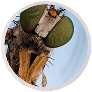 Condylostylus Sp 81 Round Beach Towel
