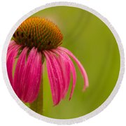 Coneflower - Summer Color Round Beach Towel