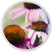 Coneflower Jewel Tones - Echinacea Round Beach Towel