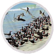 Congregating Skimmers Round Beach Towel
