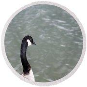 Canadian Goose Contemplating A Swim  Round Beach Towel