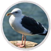 Contemplating Life Of A Sea Gull Round Beach Towel