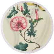 Convolvulus With Yellow Butterfly Round Beach Towel