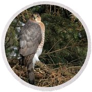 Coopers Hawk In Predator Mode Round Beach Towel