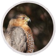 Coopers Hawk In Profile Round Beach Towel