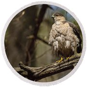 Coopers Hawk Pictures 124 Round Beach Towel