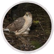 Coopers Hawk Pictures 135 Round Beach Towel