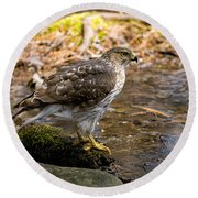 Coopers Hawk Pictures 61 Round Beach Towel