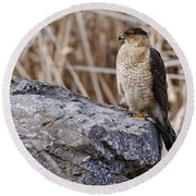 Coopers Hawk Pictures 91 Round Beach Towel