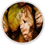 Copper Beech Leaves Round Beach Towel