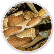 Copperhead Snake Round Beach Towel