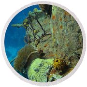Coral Growth On A Ship Wreck Round Beach Towel