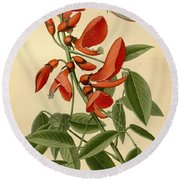 Coral Tree Round Beach Towel
