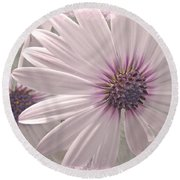 Coreopsis - Dreaming In Pink Round Beach Towel