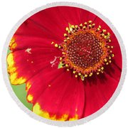 Coreopsis Or Golden Tickseed Round Beach Towel