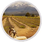 Corgi And Mt Shasta Round Beach Towel