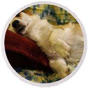 Corgi Asleep On The Pillow Round Beach Towel