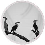 Cormorants-black And White Round Beach Towel