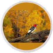 Corn Fed Woodpecker Round Beach Towel