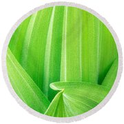 Corn Lily Leaf Detail Yosemite Np California Round Beach Towel