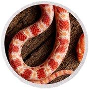 Corn Snake P. Guttatus On Tree Bark Round Beach Towel