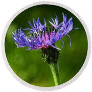 Cornflower Round Beach Towel