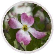 Cornus Florida - Pink Dogwood Blossoms Round Beach Towel