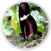 Costa Rican False Postman Butterfly Round Beach Towel