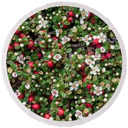 Cotoneaster Bush Background Round Beach Towel
