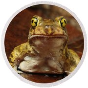 Couchs Spadefoot Toad Round Beach Towel