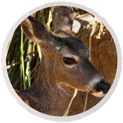 Coues White-tailed Deer - Sonora Desert Museum - Arizona Round Beach Towel