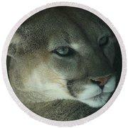 Cougar-7688 Round Beach Towel