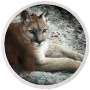 Cougar Country Round Beach Towel