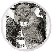 Cougar From Colorado Round Beach Towel