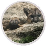 Cougar Spotted Me Round Beach Towel