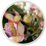 Couroupita Guianensis - Cannonball Tree Flowers Round Beach Towel