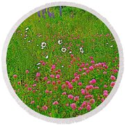Cow Clover And Ox-eye Daisies On Campobello I Round Beach Towel