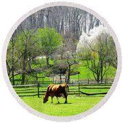 Cow Grazing In Pasture In Spring Round Beach Towel
