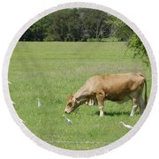 Cow Grazing With Egret Round Beach Towel
