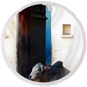 Cow In Temple Udaipur Rajasthan India Round Beach Towel