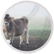 Cow In The Fog Round Beach Towel