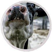 Cow Kiss Me Round Beach Towel