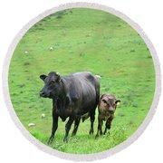 Cow With Calf On Thorpe Hillside Round Beach Towel