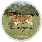 Cows Grazing Round Beach Towel