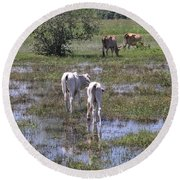Cows In The Pantanal Round Beach Towel