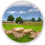 Cows On The Green Field Round Beach Towel